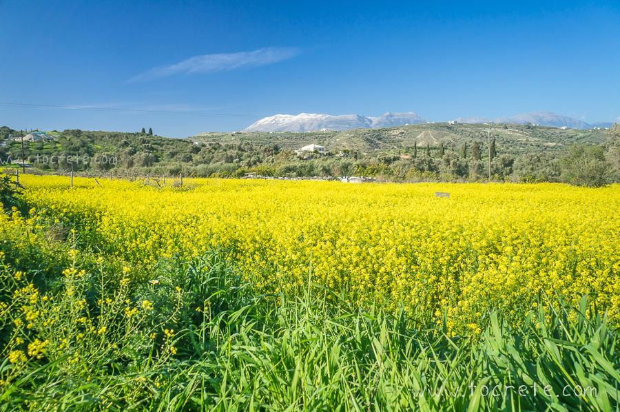 Весна на Крите