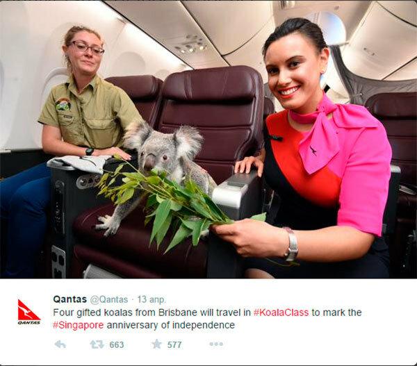 коала летит в самолете