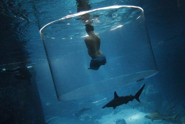 Ник Вуйичич поплавал в воде со смертельными акулами 0 12da90 cc595a04 orig