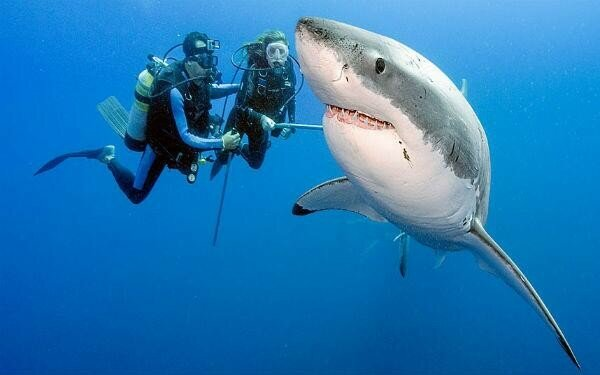 Хорошо смеется тот, кто настоящая акула