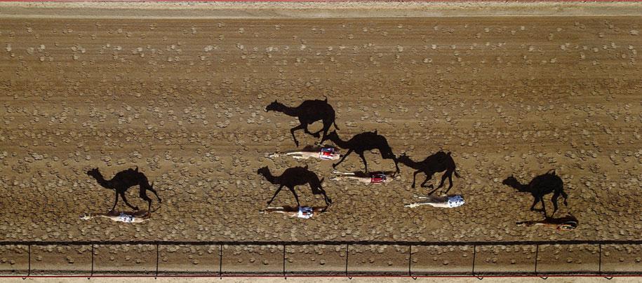 Верблюжие бега Аль Мармуна, в Дубае, Объединенные Арабские Эмираты