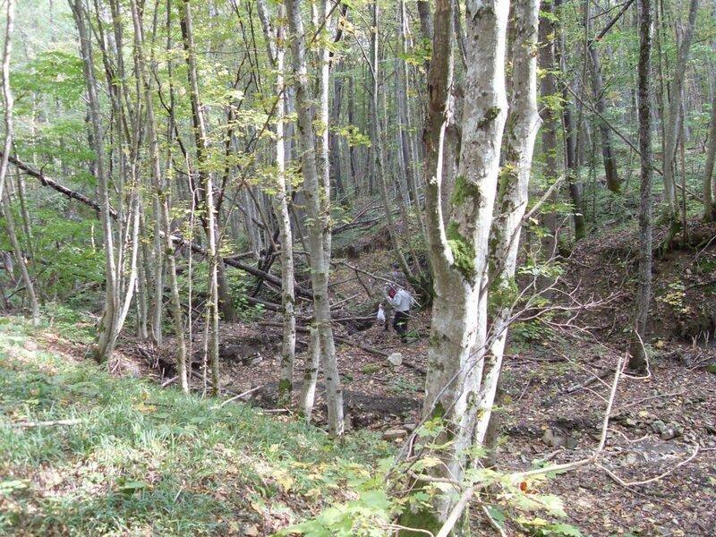 11  октября 2008, под Горячим Ключом, лес (32) .JPG