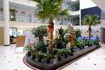 Растения в центральном холле