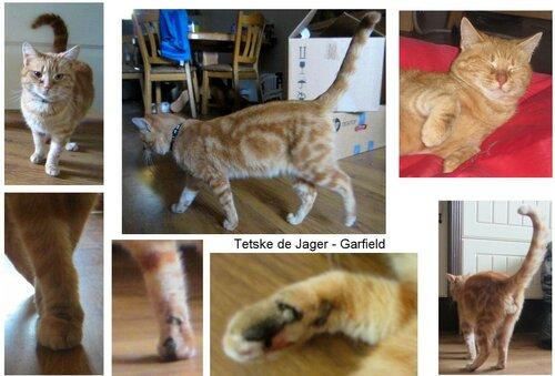 Пороки и недостатки: мозаицизм и черепаховость у котов 0_1b3b3f_5f7a56b2_L