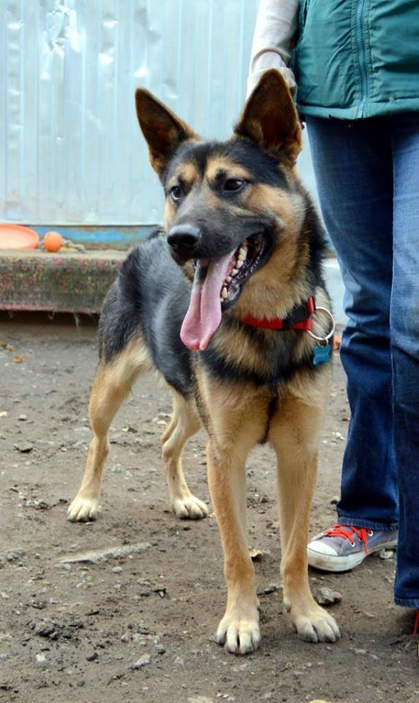 Джонни собака из приюта догпорт