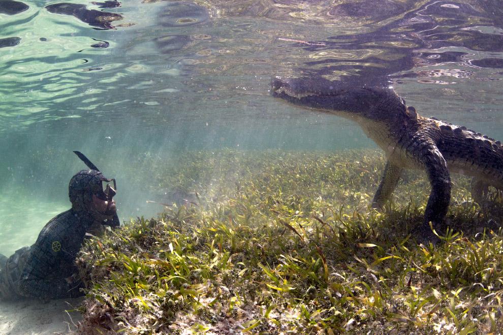 4. Кстати, это один из 6 крокодилов, которых снимали фотографы. (Фото Mark Romanov & Forrest Ga