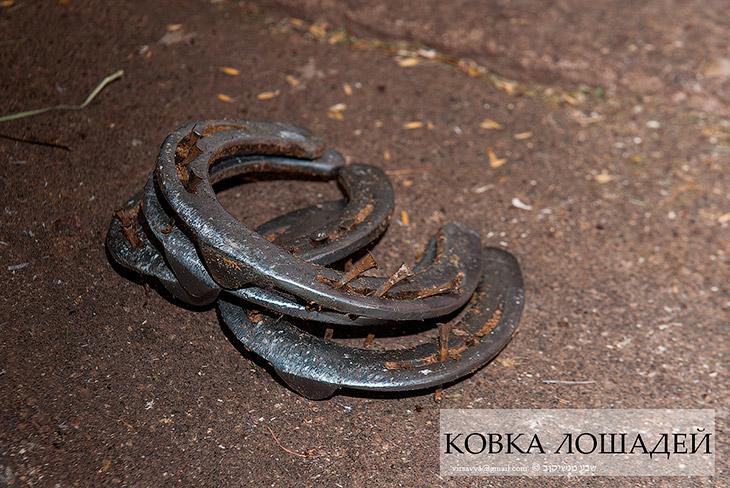 Как подковывают лошадей (39 фото)