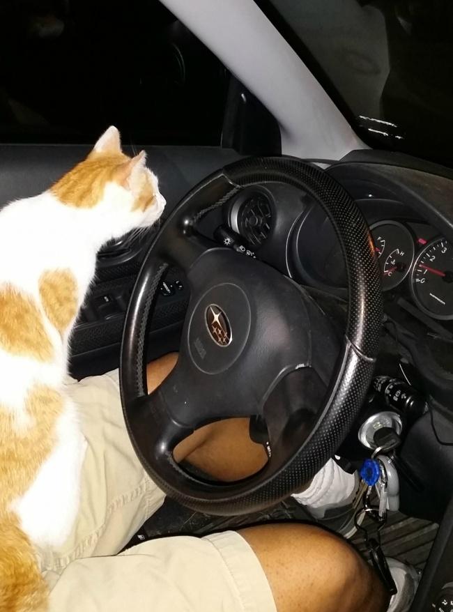 © AfroCircuit/reddit.com   Кажется, мой кот немного поправился