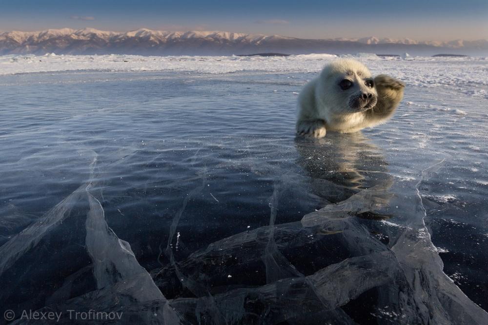 Кстати, совсем скоро Алексей отправляется вочередную фотоэкспедицию наозеро Байкал. Кто знает, воз
