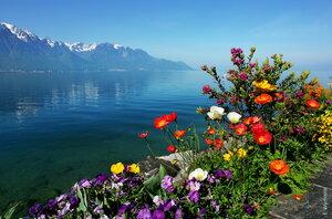 цветы на берегу Женевского озера
