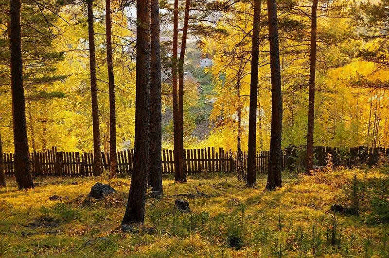 Осенний занавес.jpg