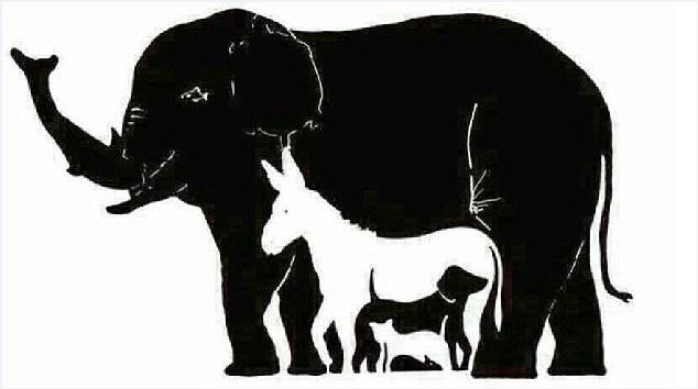 Сколько здесь животных ?
