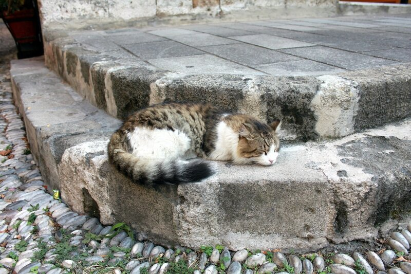 IMG_7642-Коты.jpg