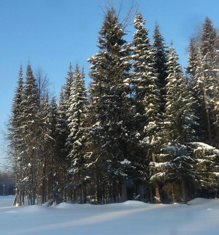 Как красив зимний лес!