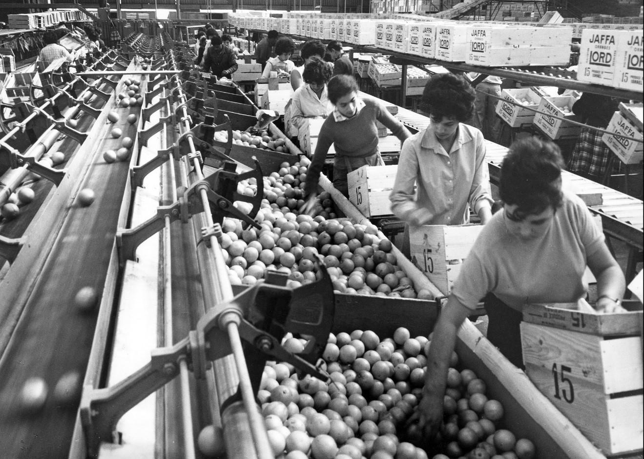 Время самой оживленной торговли апельсинами