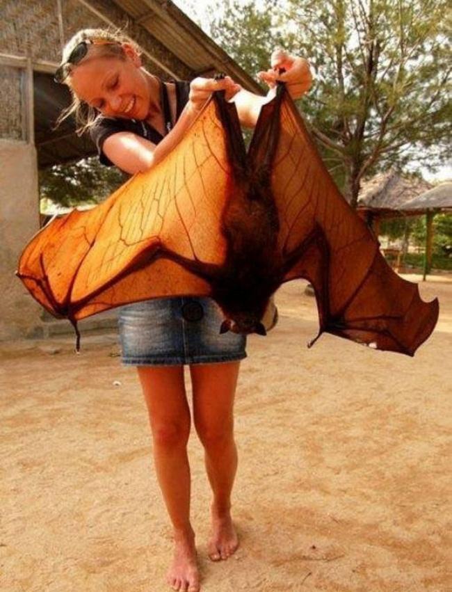 © fotocomedia.com  Ноневсе крылатые существа умеют летать. Может быть, поэтому эму так недов