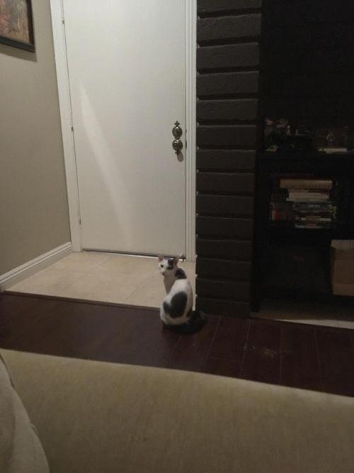 Кот терпеливо ждет своего хозяина