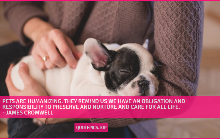 Pets are humanizing. They remind us we have an obligation and responsibility to preserve and nurture and care for all life. ~James Cromwell