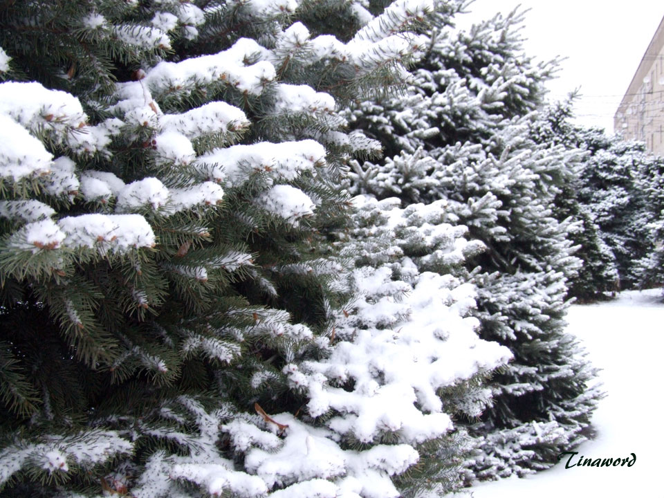 Вот-и-снег-03.jpg