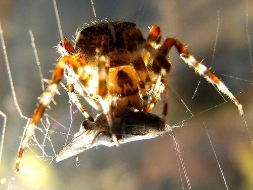 У паука ... фотограф Александр Улисский