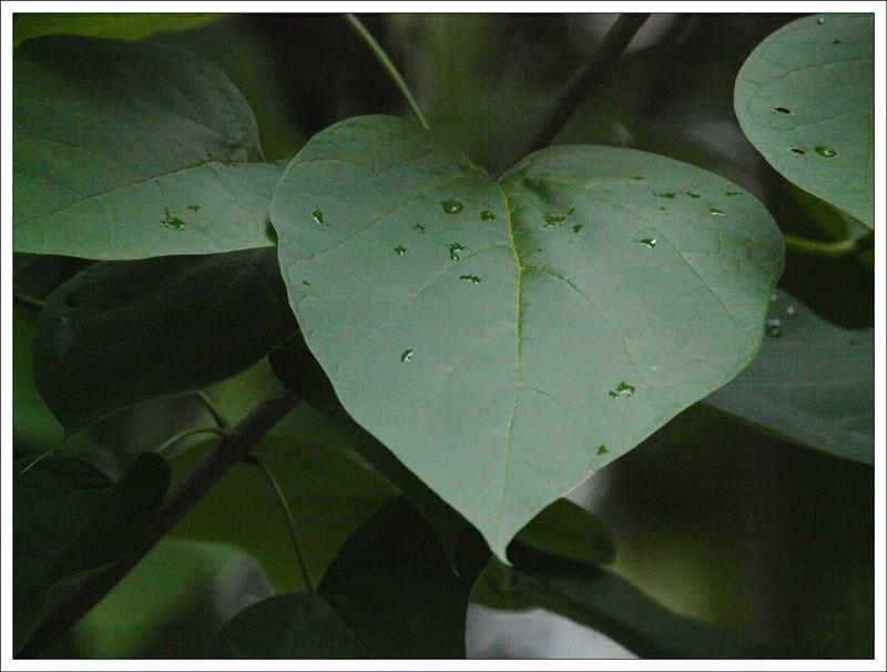 104_Leaf.jpg