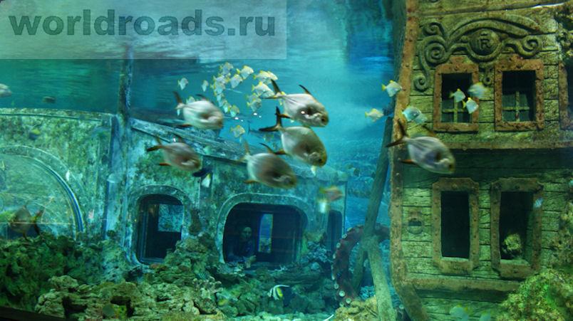 Океанариум Воронеж