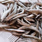 Сонник Мелкие Рыбки В Банке