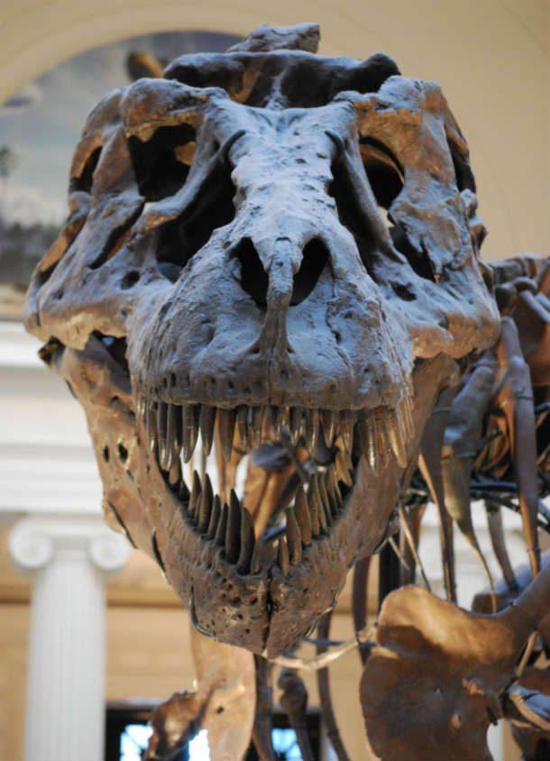 Великие загадки динозавров
