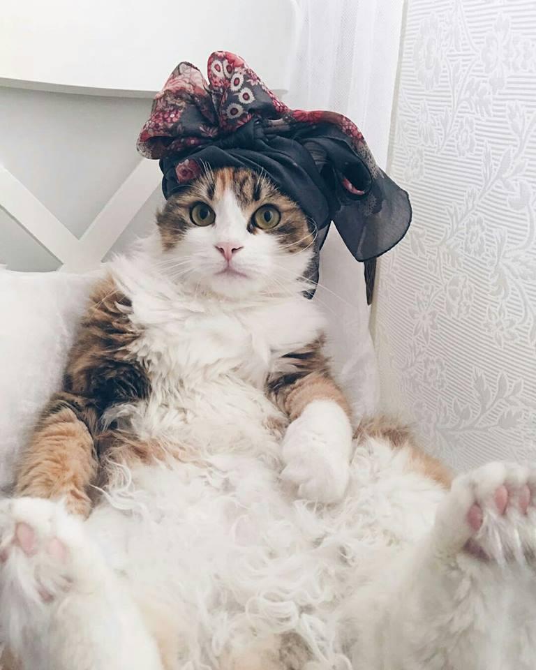 кошки-1.jpg