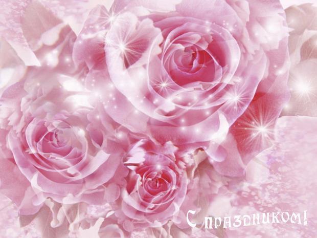 С днем российской адвокатуры! Цветы розы