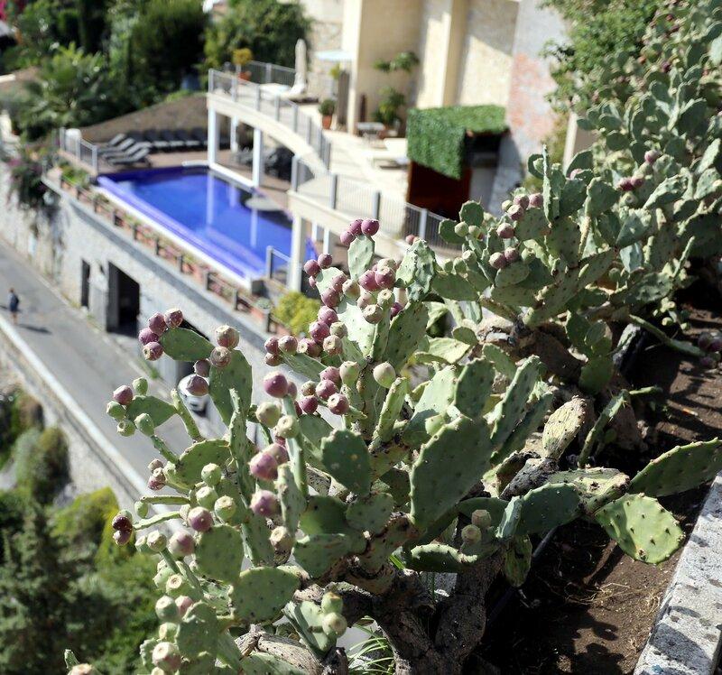 Taormina. Cactuses