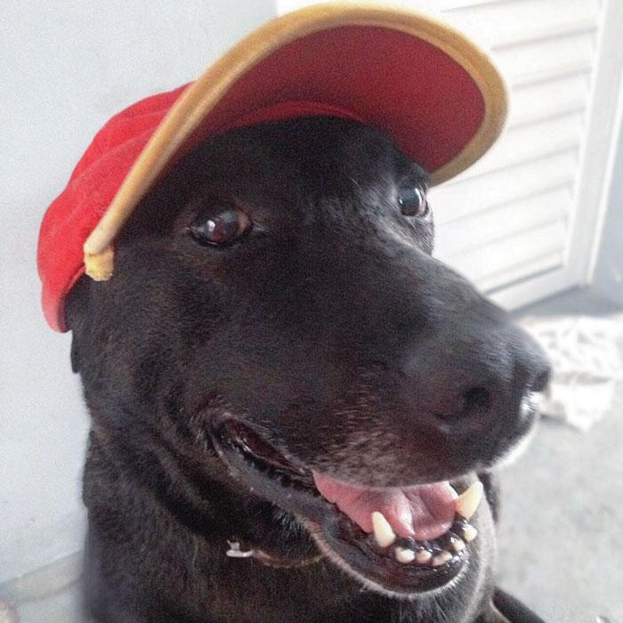 Новые хозяева не только полюбили собаку, они даже дали ей работу. У Нигао есть кепочка и карточка ра