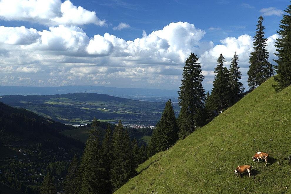 На этом наше путешествие на альпийские луга закончено. Мы познакомились с швейцарскими сыродела