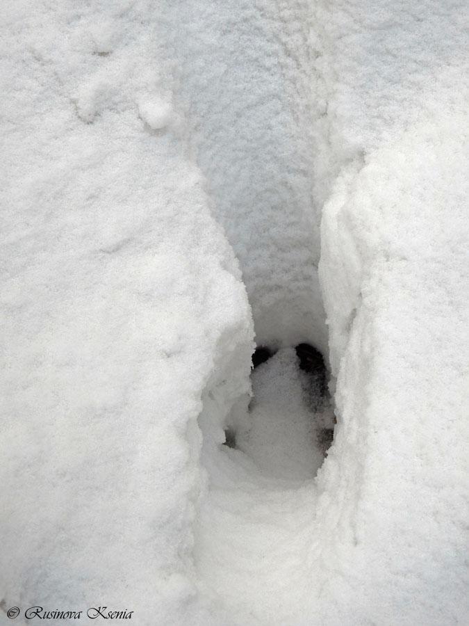 След кабана на снегу