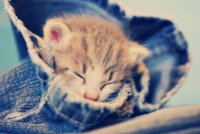 cats_cats_96.jpg