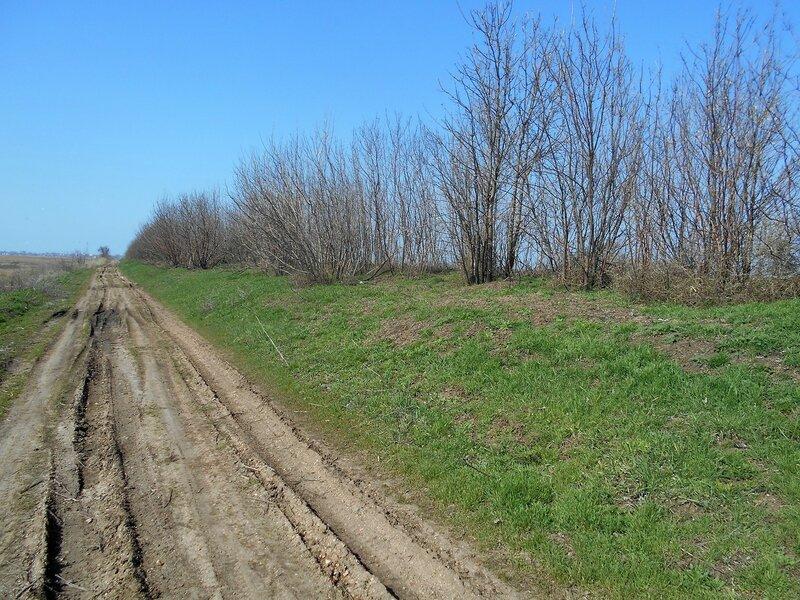 Трава зелёная на склоне ... DSCN1465.JPG