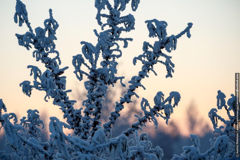 замерзшая облепиха в снегу