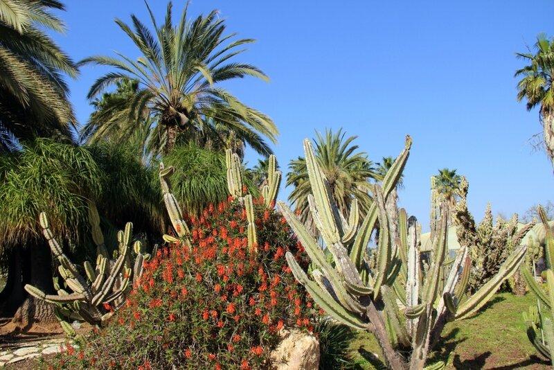 Парк камней и кактусов. Субботняя прогулка 25 февраля