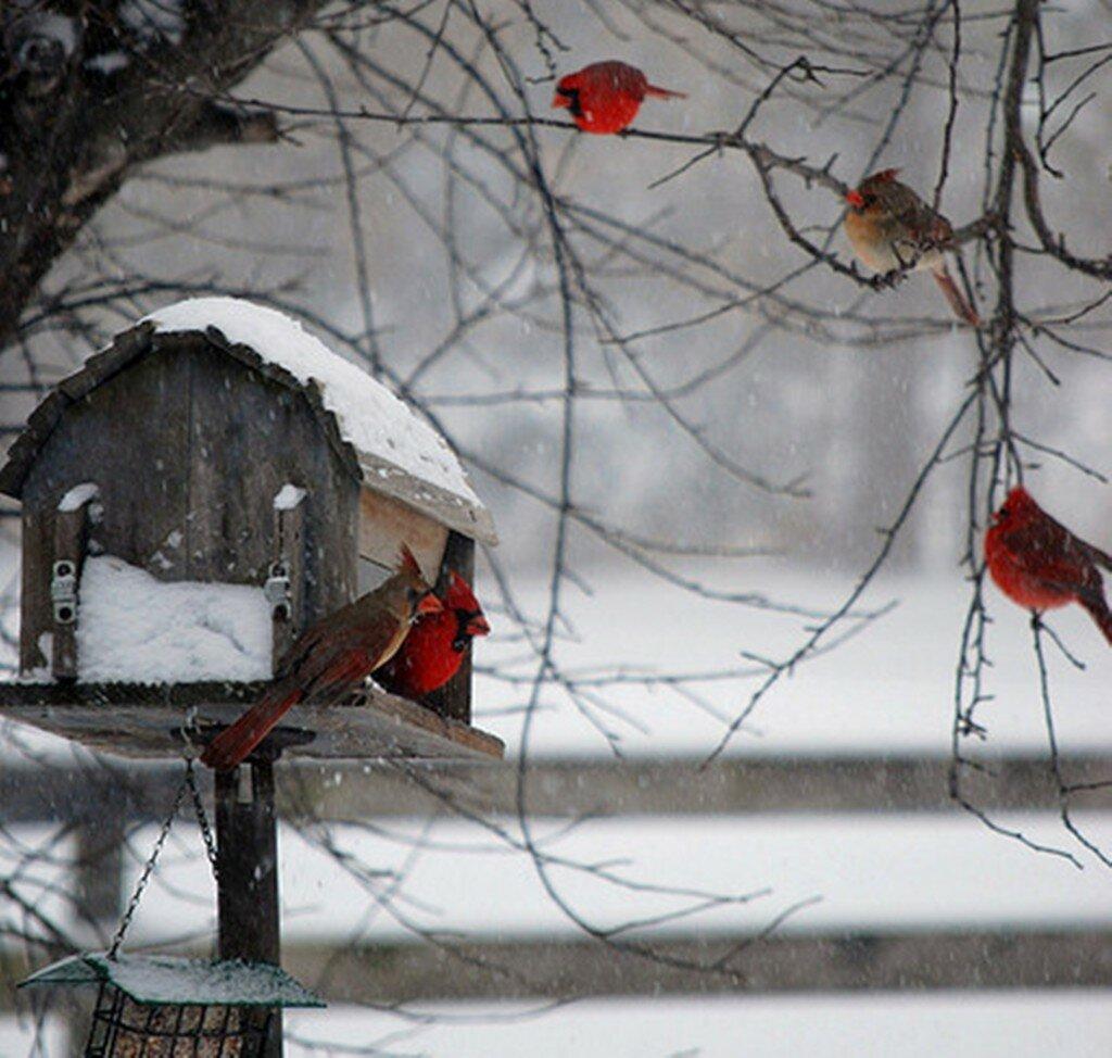 зима-фон-классно-0.jpg
