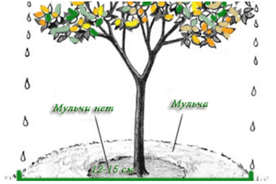 Мульчирование деревьев - делаем правильно