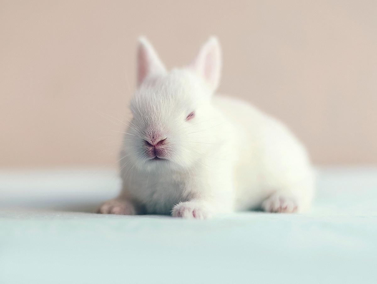 Белый кролик / фотограф Ashraful Arefin