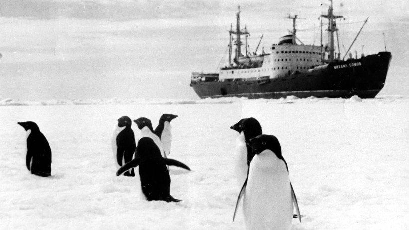 Открытки. С Днем полярника! Пингвины встречают полярников!