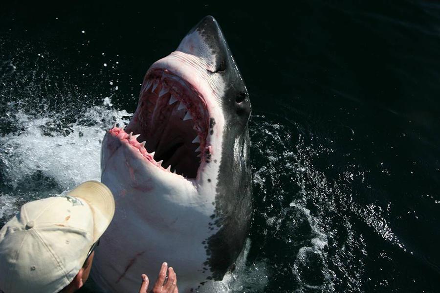 3. По словам рыбака, эта гигантская рыба не только следует за ним повсюду, но даже позволяет ему чес