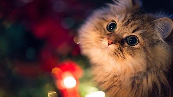 Не волнуйтесь, чтобы избавиться от таких симптомов, не придется прощаться с котиком.Просто уби