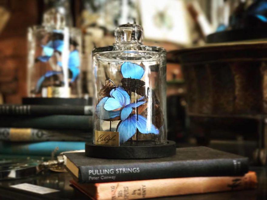«У меня получилось более 800 бабочек. Мне нужно было поделиться ими с миром».