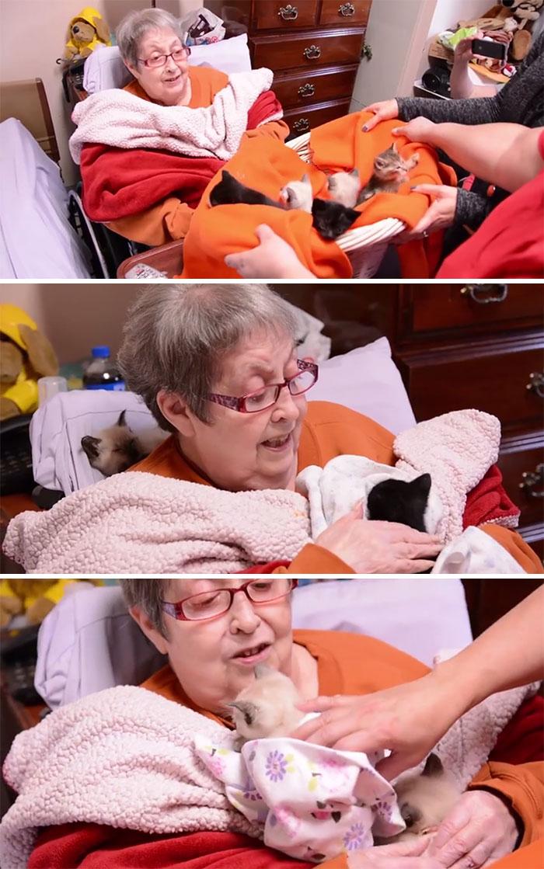 Пациентка хосписа исполнила свое предсмертное желание потискать котят.