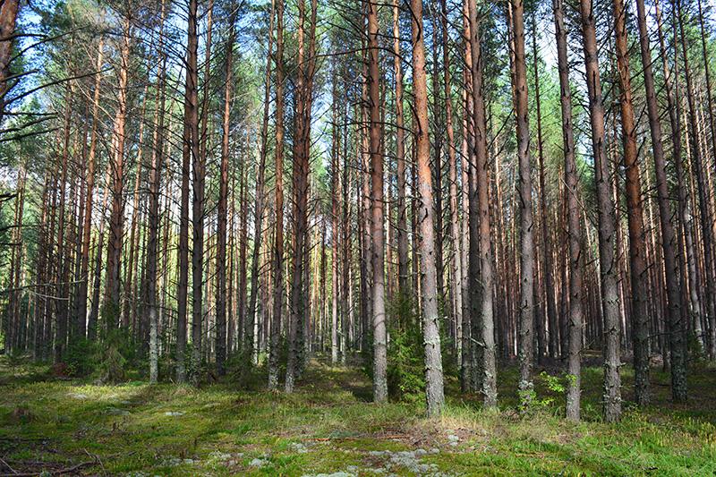 мой лес 16 10.jpg