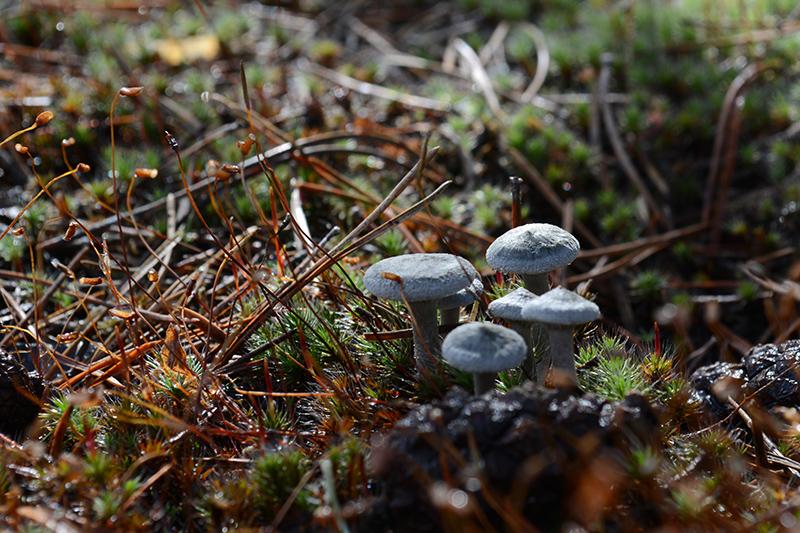 грибной мир опознание 10.jpg