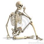 Скелет-478.jpg
