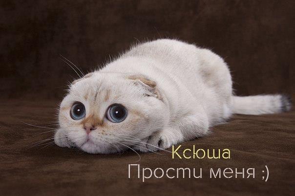 Прости меня, Ксюша!